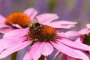 British Bee and Flower