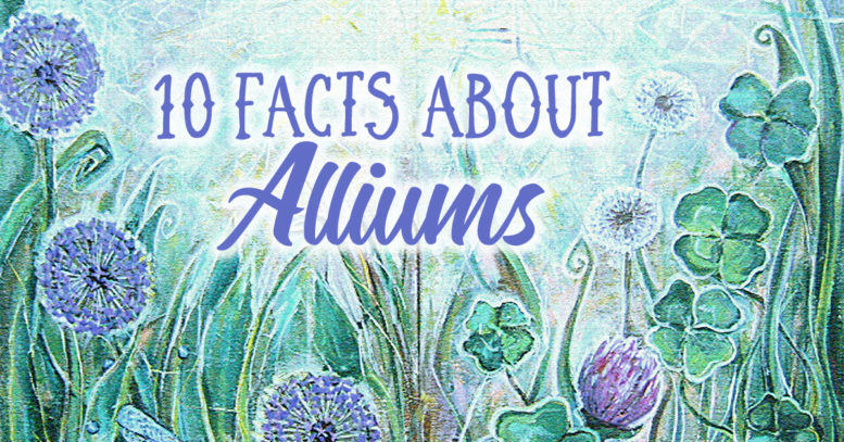 10 facts about Alliums